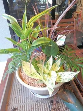 ミニ観葉植物の寄せ植え