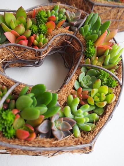 多肉植物ハートの寄せ植え