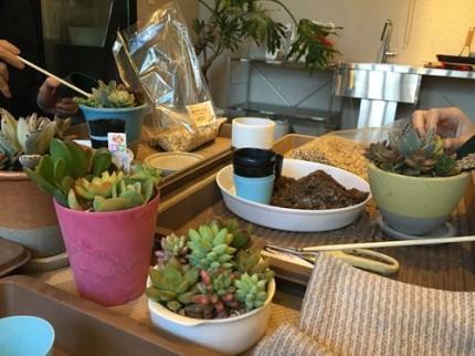 多肉植物ワークショップ