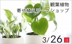 ミニ観葉寄せ植えワークショップ