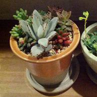 多肉植物寄せ植え1